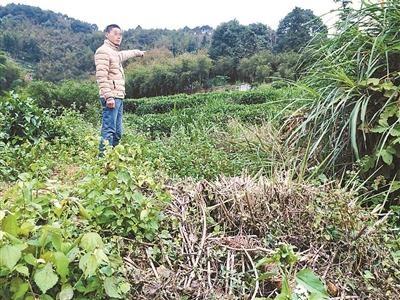 徐云弟向记者指认徐浩的犯罪现场