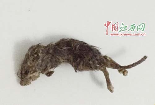 湖北女子吃瓜子吃出老鼠尸体 躯体已发硬(图)
