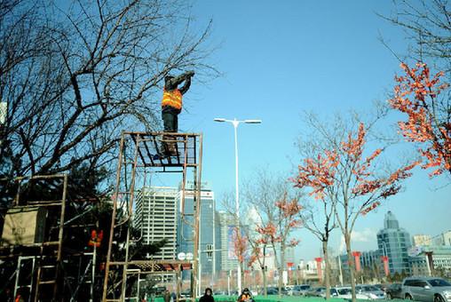 沈阳给大树装假树叶 遭市民吐槽