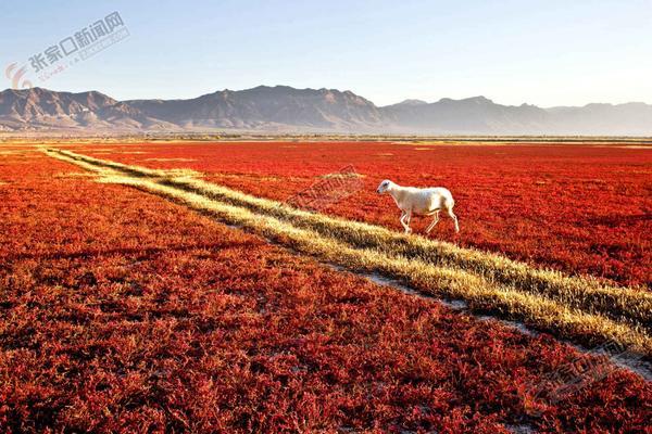 周润生:在大自然中感悟摄影人生 阳原红海滩