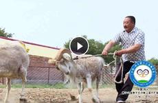《说事》:探班尚义赛羊会运动员