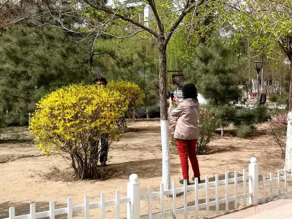 踏青出游,请用文明守护春色 市民跨进围栏拍照留影。 赵晓刚 摄