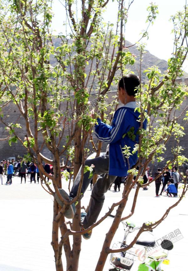 乱爬树不文明 和颖摄