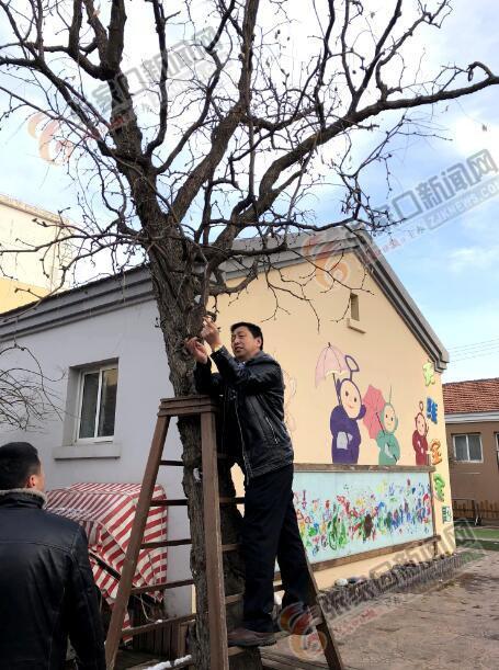 """省园林专家""""问诊""""宣化区古树名木"""