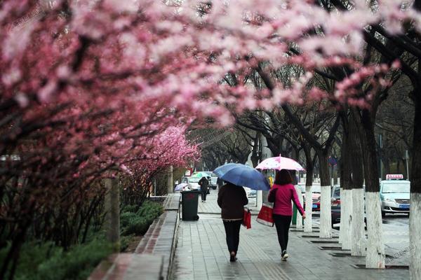好雨知时节 图为市民在雨中行走。 陈飞摄