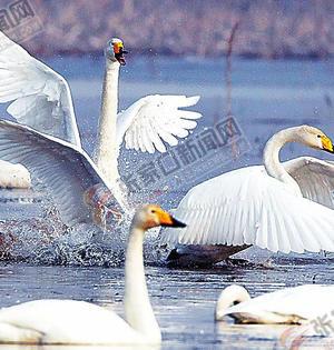 湿地·候鸟