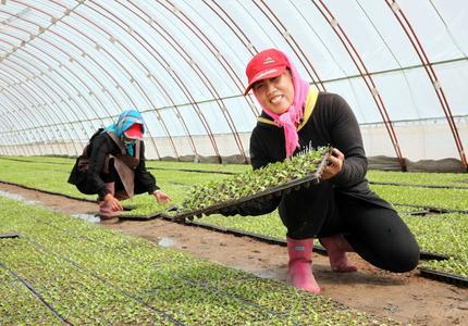 绿色蔬菜远销国外