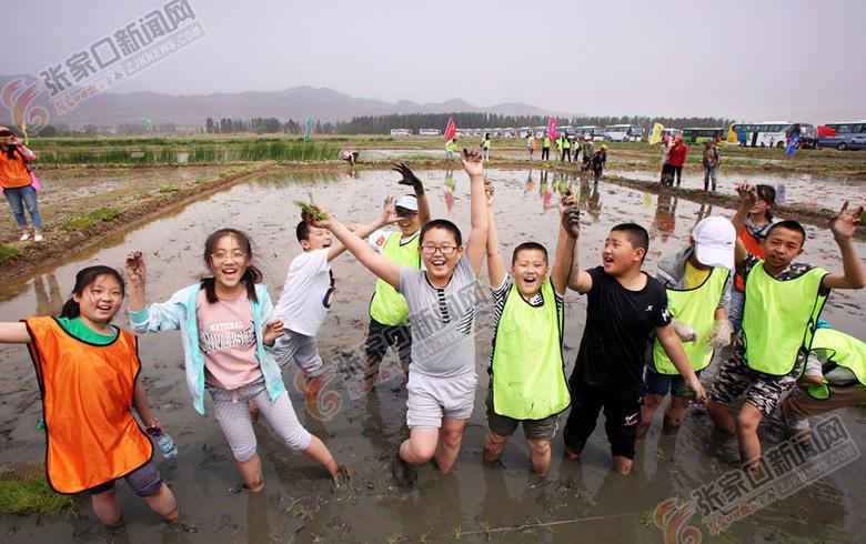 千余市民体验农耕乐趣  怀安第一届稻田插秧节举行