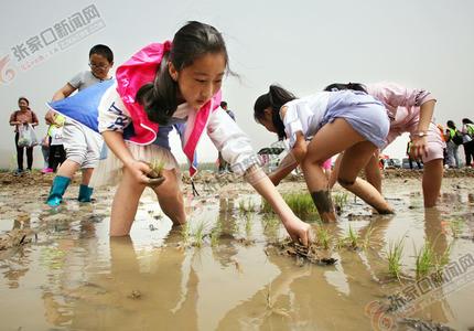 指尖感触的农耕文化 ———中国·怀安第一届稻田插秧节侧记
