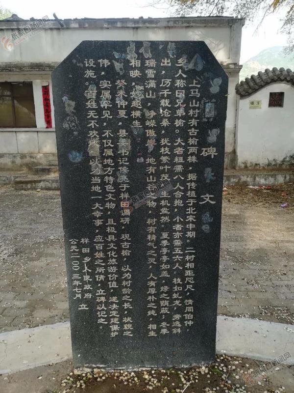 """【张垣风物之国宝传奇】张家口赤城""""兄弟榆""""荣膺""""中国最美古树"""" 当地政府为古榆树竖立的石碑。"""