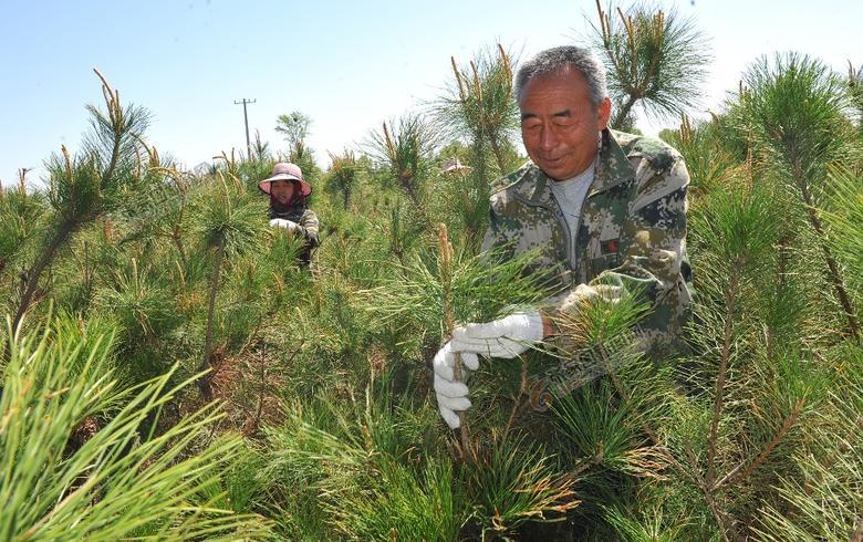 赵玉成:20年植树造林绘就绿色梦