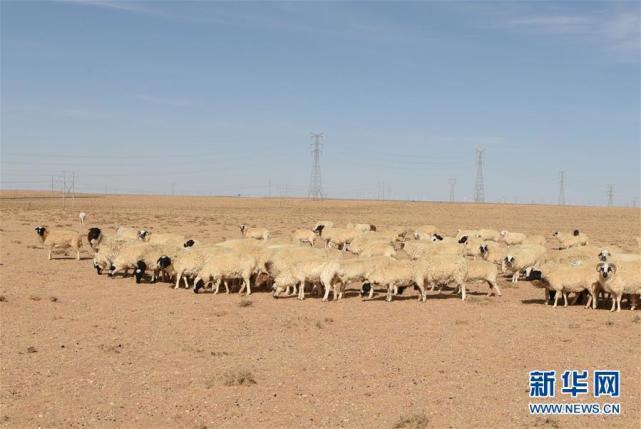 内蒙古巴彦淖尔市草原旱情严重