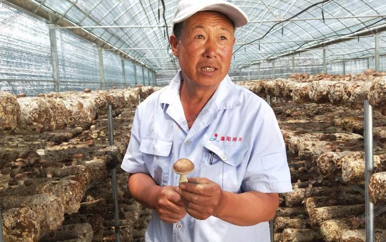 【脱贫攻坚记】小庄村:农业产业化是条致富路