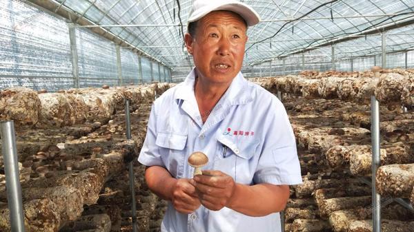 【脱贫攻坚记】小庄村:农业产业化是条致富路 小庄村引进香菇生产。