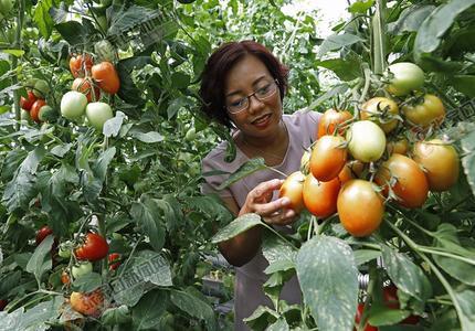 农业化龙头企业 带动农民致富