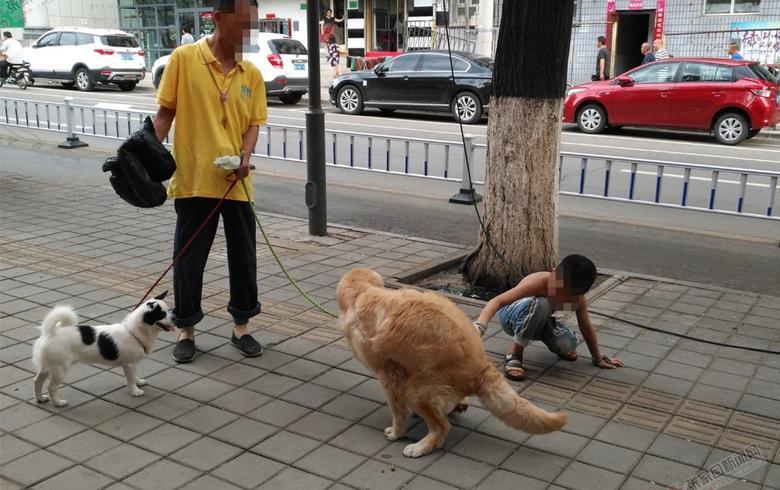"""【聚焦城市养狗问题(之五)】治理""""狗患"""",立法或是出路"""