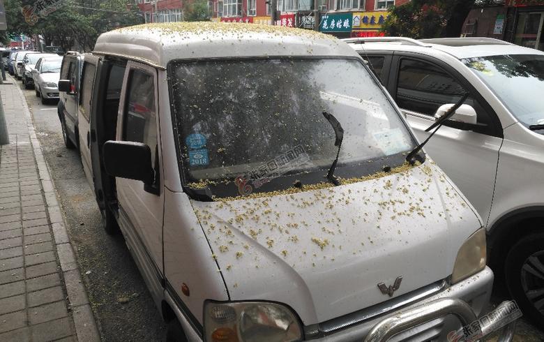 国槐生虫害树下人车遭殃