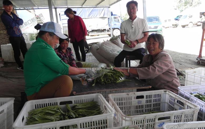 大家帮我卖西瓜我为乡亲销蔬菜