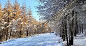 雪中天路美景如画