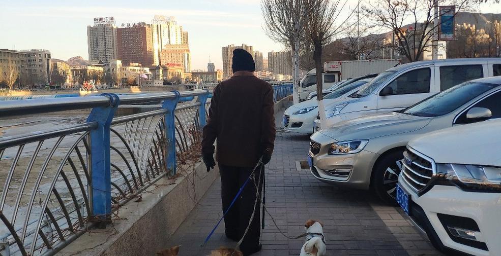【迎冬奥盛会 创文明城市】文明养犬,您做到了吗?