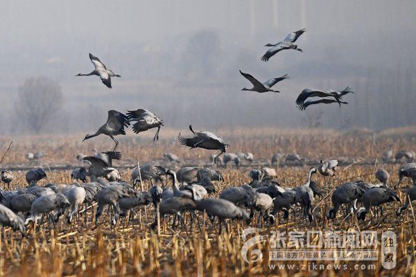 官厅水库湿地公园 成候鸟长久栖息地