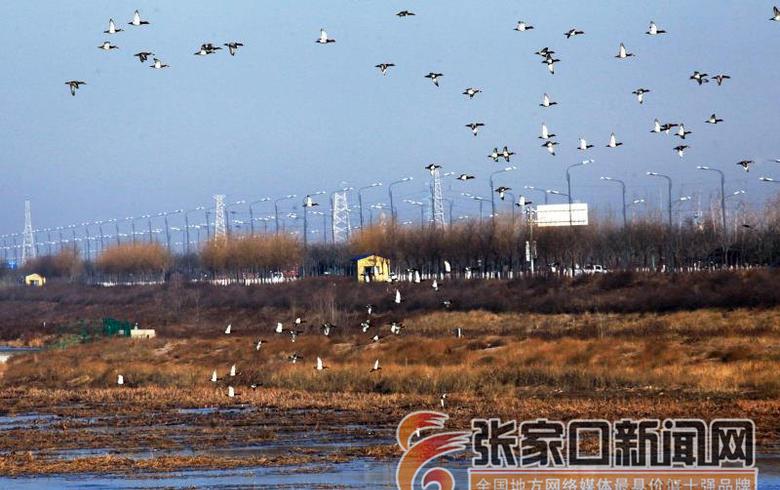生態修復引候鳥