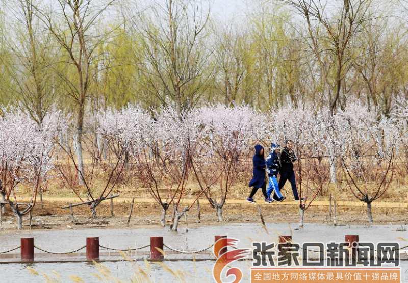 清明小长假 探春国家湿地公园