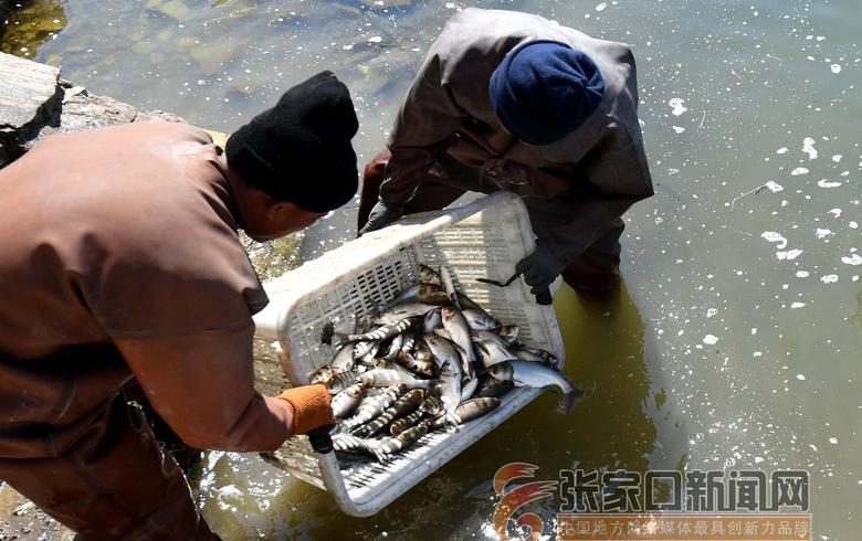 官廳水庫開啟春季漁業資源增殖與生態修復工作