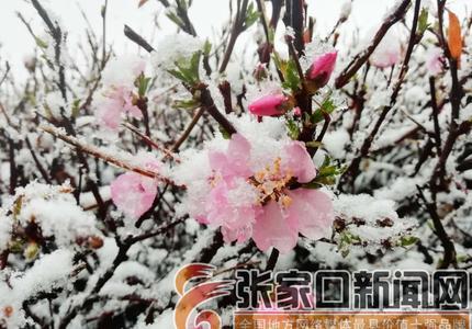 雪降康保春妖娆