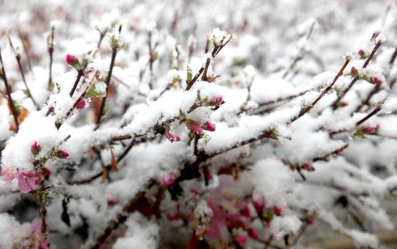 张家口太任性!快五月了还下雪!