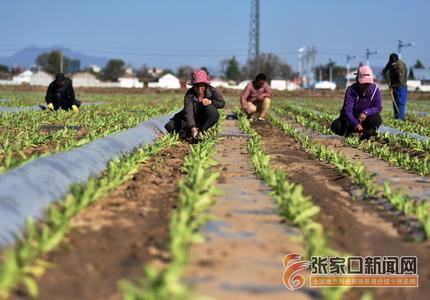 河北宣化:专业种植基地助力乡村振兴