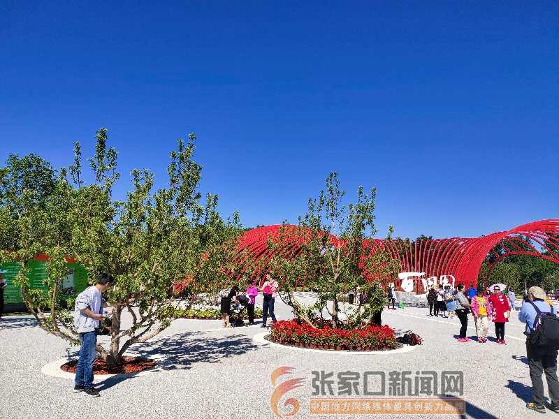 怀来八棱海棠花绽北京世园会