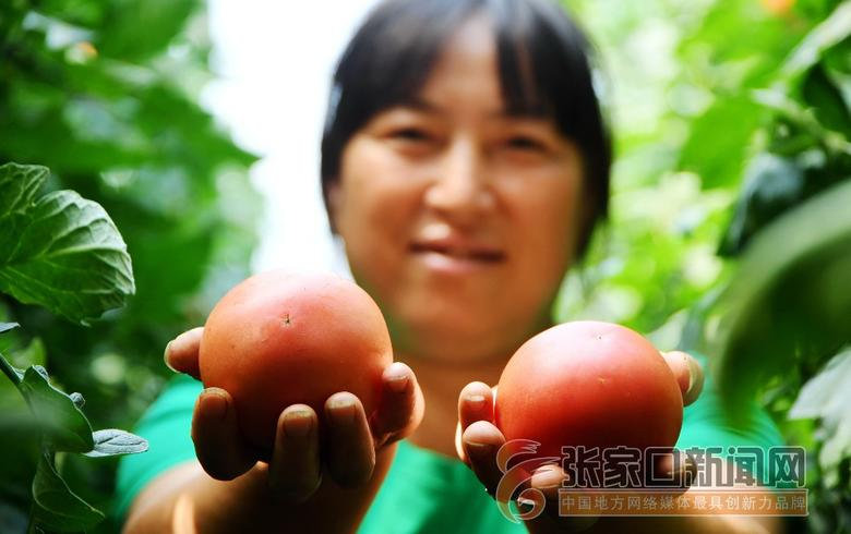 怀来:富硒蔬菜富农家