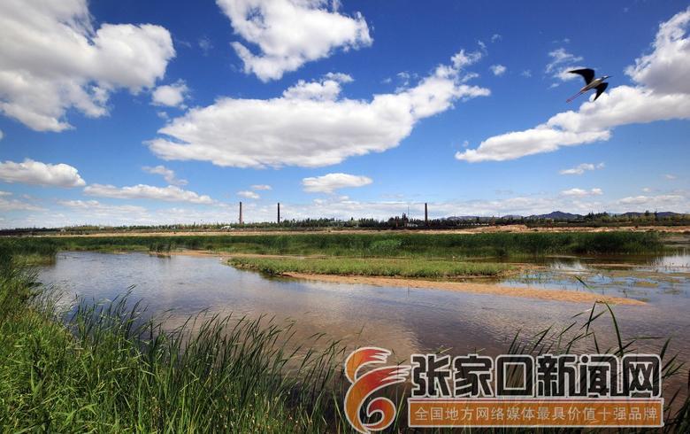 洋河湿地美如画