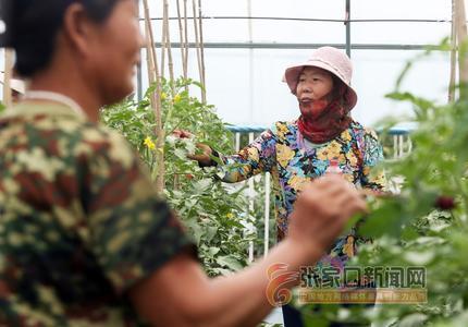 精品蔬菜促扶贫