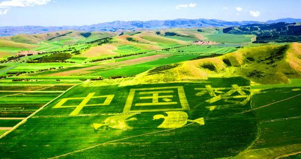 """油菜花海泛金波 彩绘油菜花呈现""""中国梦""""的图案(无人机拍摄)。"""