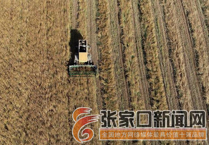 塞北:退水还旱的农作物熟了