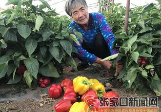 """""""菜篮子""""鼓起农民""""钱袋"""
