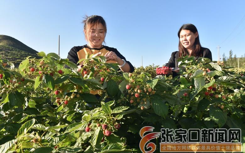 下花园:特色种植助力乡村振兴