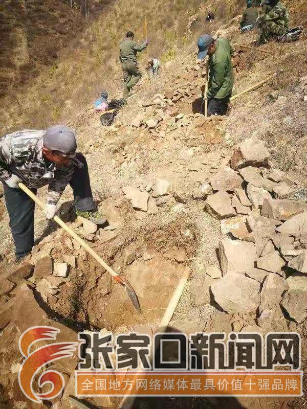 杨建忠:冬奥赛事核心区植绿人 挖树坑