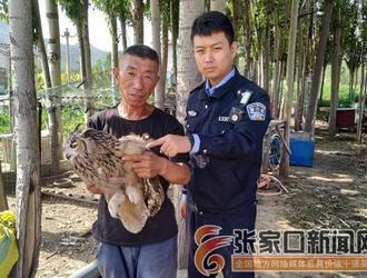 警民救治受伤猫头鹰