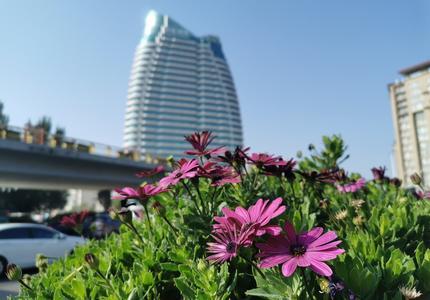 张家口市桥东区:鲜花大道 一路风景