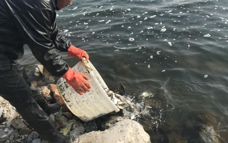 20萬公斤魚苗投放官廳水庫