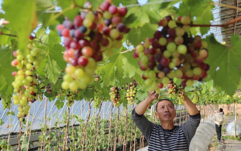 懷來:冬暖大棚促增收