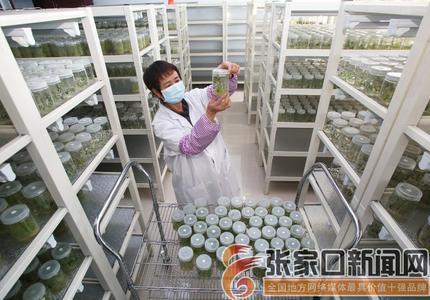 小土豆種出致富大產業