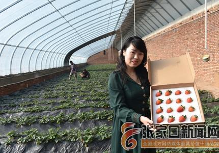 張家口下花園:錯季設施農業助力鄉村振興