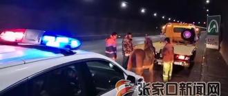 小馬高速公路跳車 高速交警將其逮回