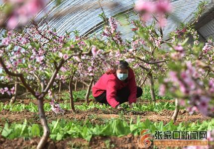 張家口宣化:抗疫情 搶農時