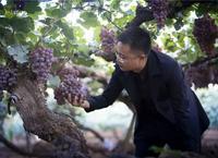 """""""干酒之源""""沙城葡萄酒的復興之路"""