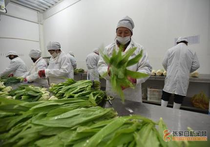 張家口涿鹿:扶貧產業助農增收